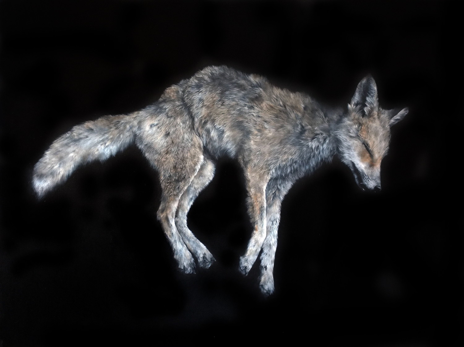 thought fox Designed to accompany the ted hughes poetry anthology for cie as english, but will be appropriate for any senior study of the thought-fox this pack contains two lessons, one introducing and explaining the concept of connotation and one applying it to the.